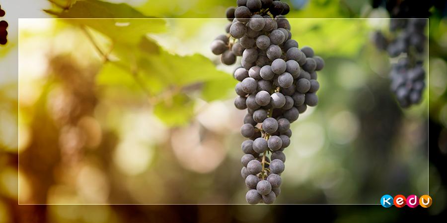 Виноградари и виноделы