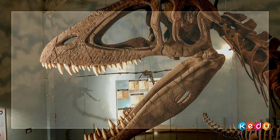 Что делает палеонтолог