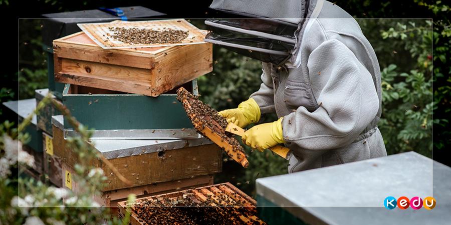 Обучение на пчеловода дистанционно