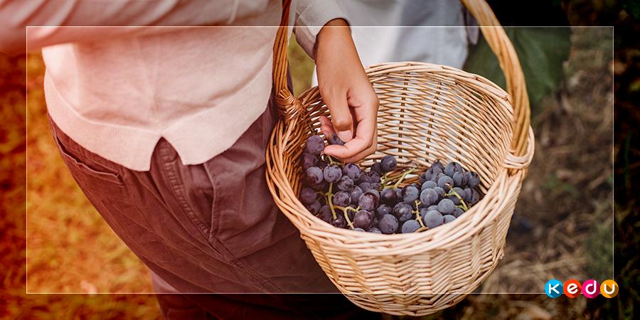 Профессия виноградарь